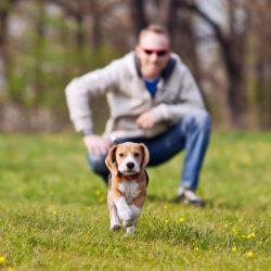 Educazione base cuccioli e adulti