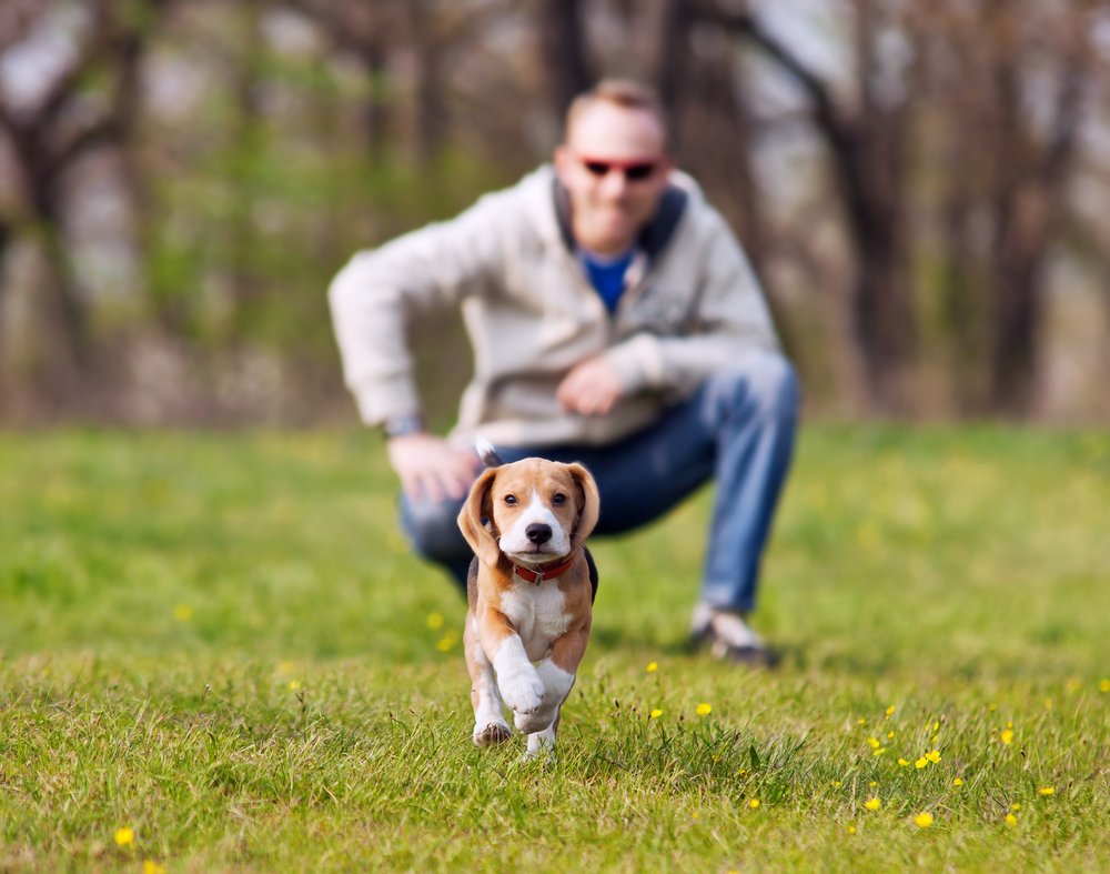 Il cane si educa o si fa educare? (2°parte)