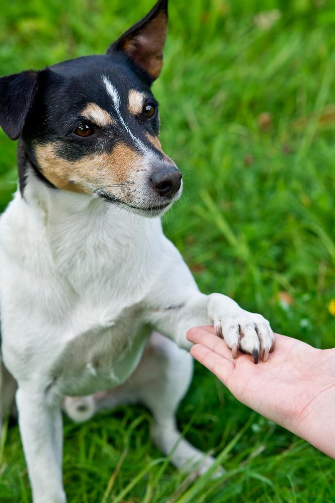 Il cane si educa o si fa educare? (3°parte)