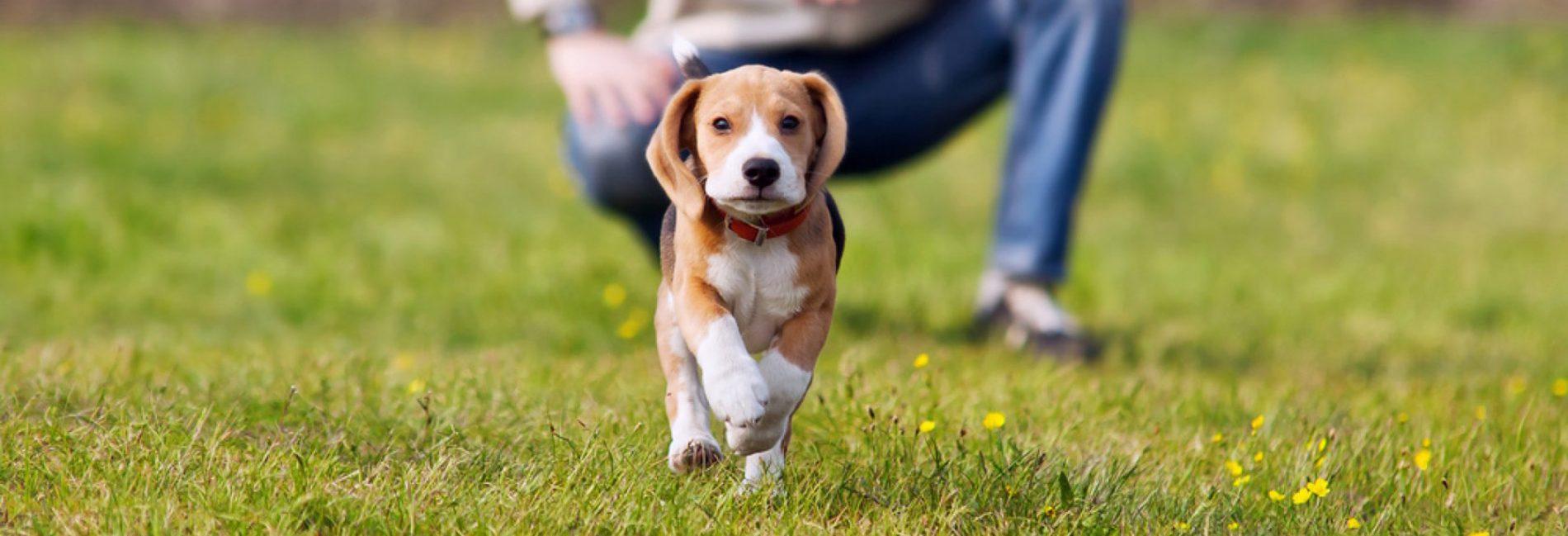 fare sì che ogni proprietario e il suo cane …