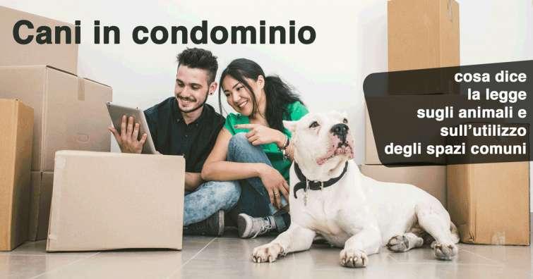 Cani in condominio: cosa dice la legge sugli animali e sull'utilizzo degli spazi comuni