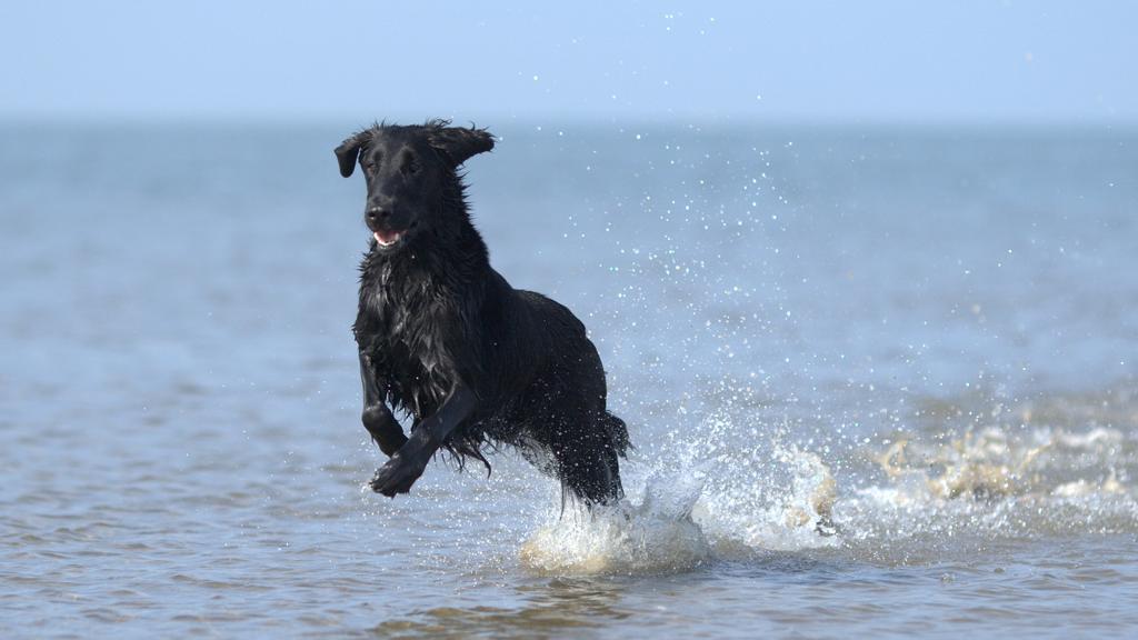 Nei lidi veneziani i cani potranno bagnarsi solo in una spiaggia, altrimenti 206 euro di multa