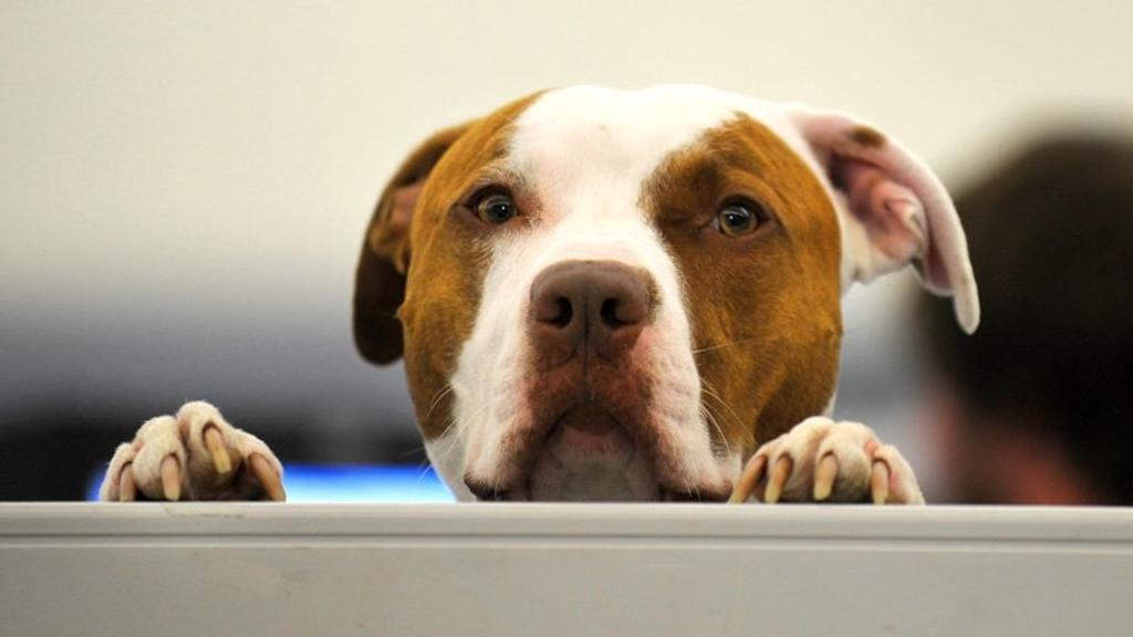 Ats di Milano apre le porte degli uffici ai cani e gatti dei dipendenti