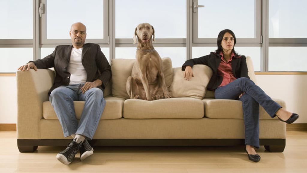 Nuova legge sui divorzi in California: gli animali come i figli