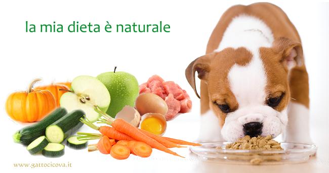 Studio scientifico. Relazione tra il benessere e l'aspettativa di vita dei cani domestici.