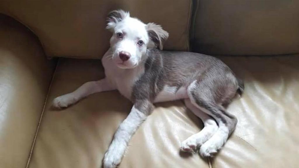 L'incredibile trasformazione del cane con la parvovirosi destinato all'eutanasia