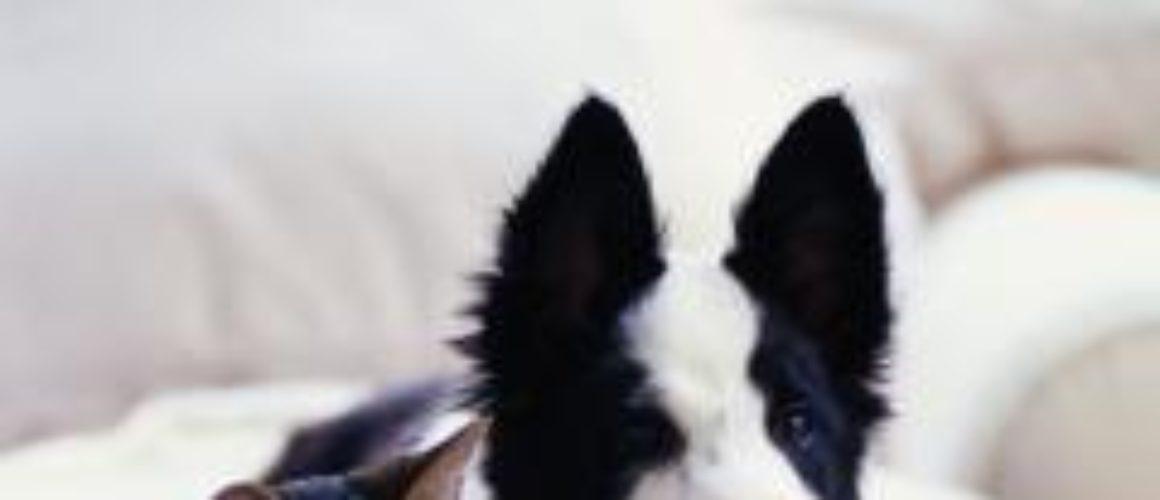 In Toscana, 1 cane ogni 8 abitanti. Adozioni in crescita, razze in calo
