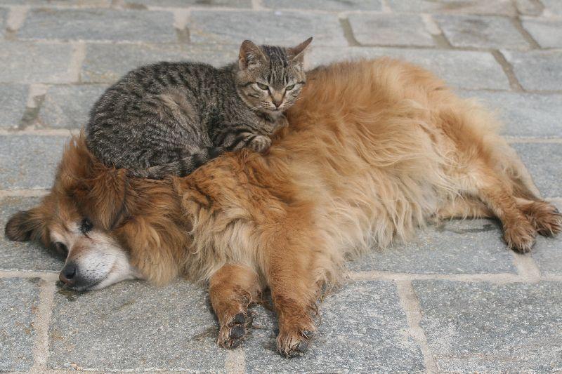Pet owners: cresce la domanda di competenza veterinaria