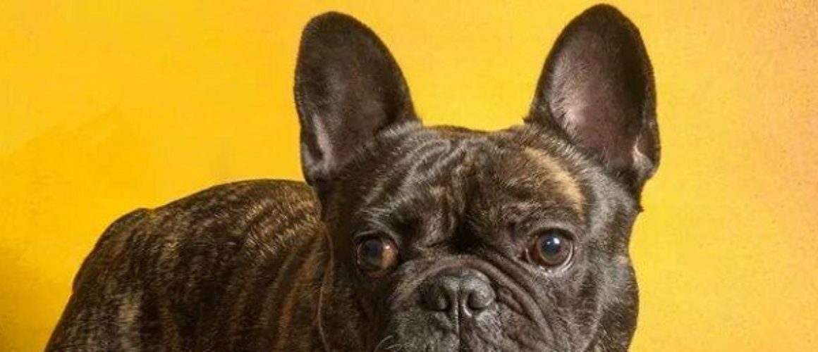 Traffico di cuccioli con abuso di professione veterinaria