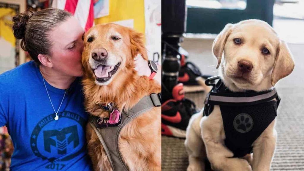 Soldatessa dopo aver perso entrambe le gambe addestra un cucciolo disabile alla pet therapy