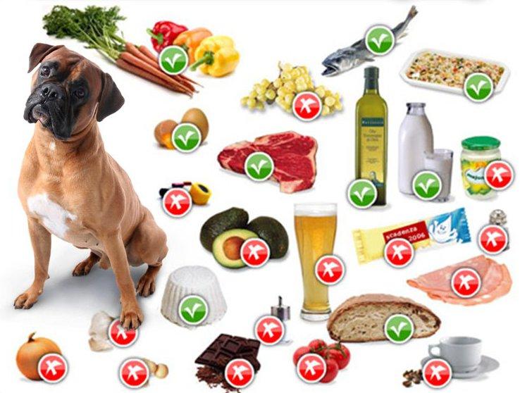Le frattaglie possono essere utilizzate nell'alimentazione del cane?