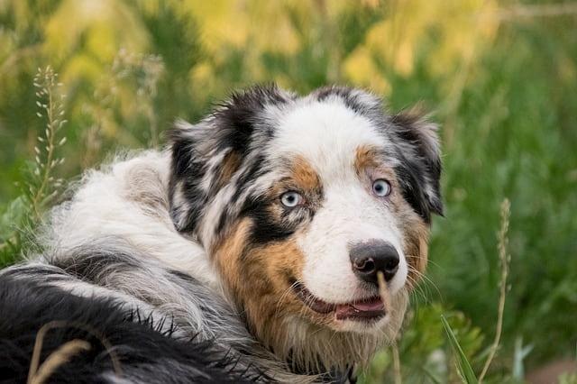 Maltrattamento: non portare il cane malato dal veterinario è un reato?