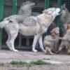 Importanza del corretto imprinting del cucciolo