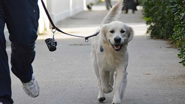 Il cane a spasso: quali sono le leggi da rispettare?