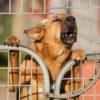 Il cane che abbaia può costare? Vediamo cosa dice la legge!