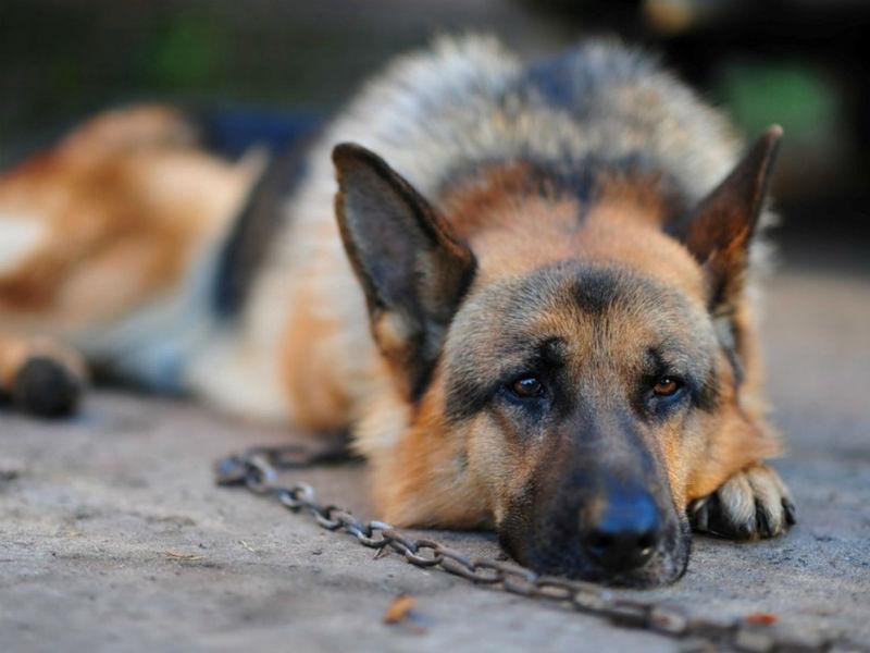 Attenzione al cane lasciato sempre in giardino: può essere un reato