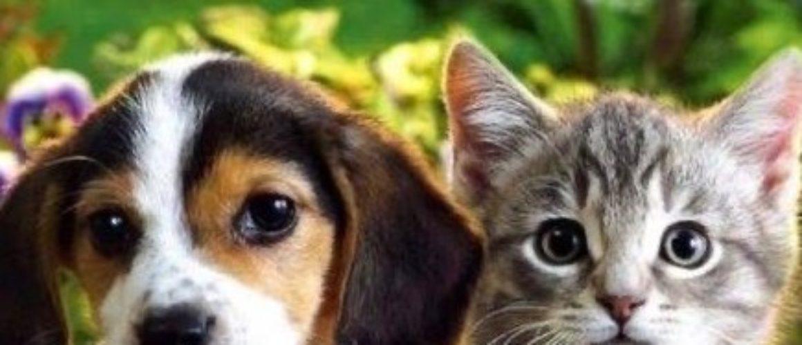 Cuccioli, la conferma: gli spostamenti sono autorizzati