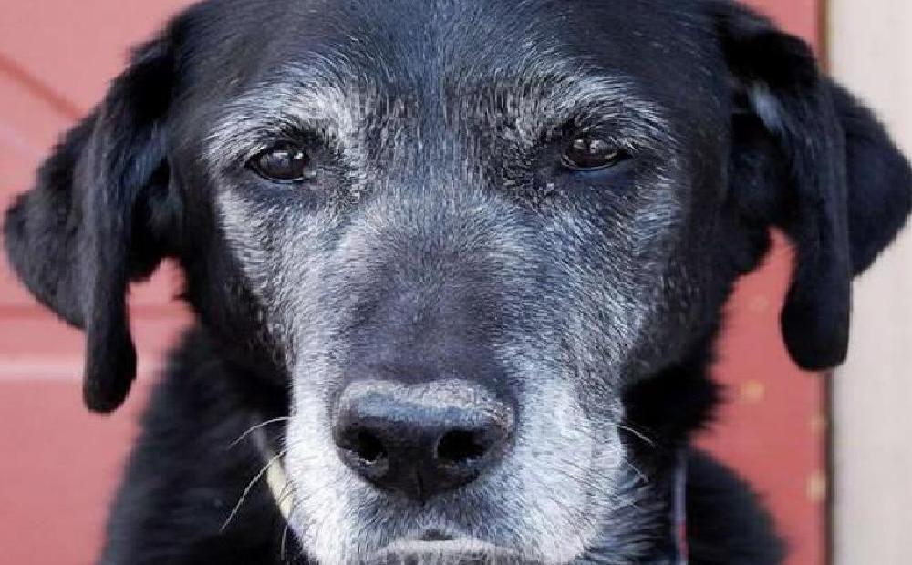 Il cane anziano e l'attività cognitiva (passando per l'Alzheimer)